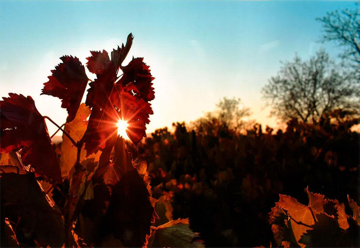 Camponaraya en el Camino. Conoce los ganadores del XXIII Concurso de Fotografía 3